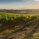 Experience Virginia Vineyards